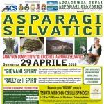 Gara di Raccolta degli Asparagi Selvatici nella val Vomano il 29 aprile 2018